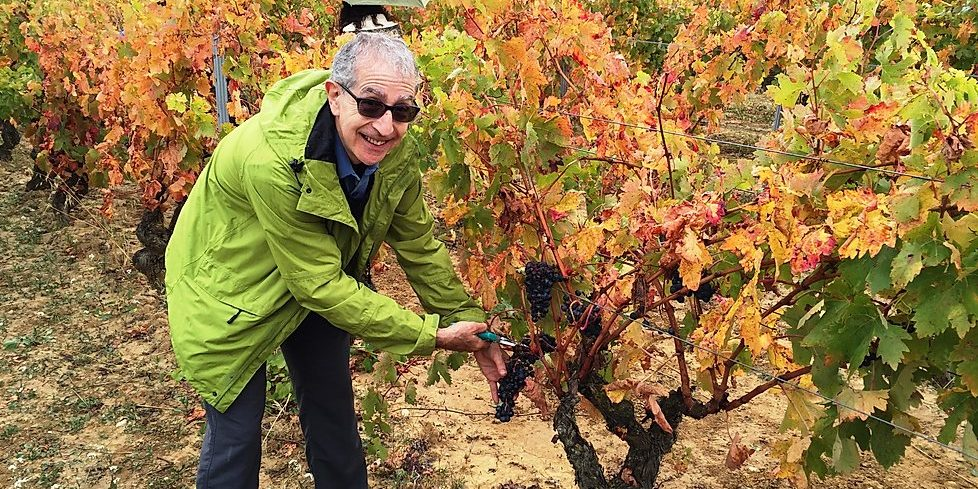 Bruce, harvesting in Rioja