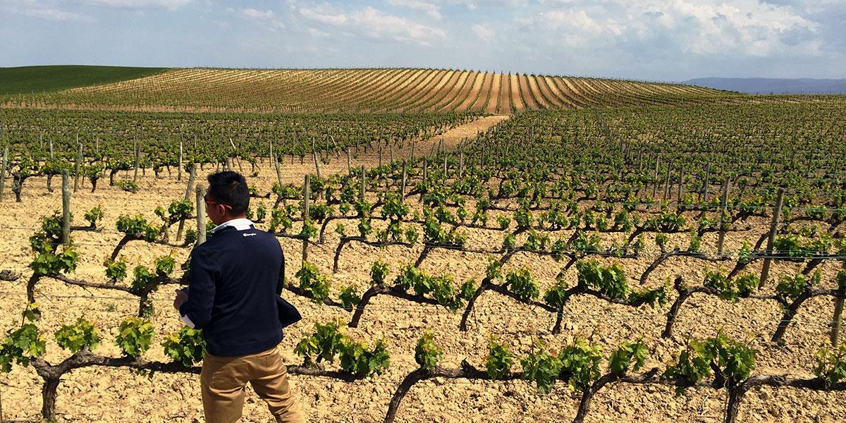 Rioja Wine Experience